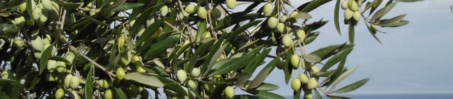 Kalkan villas and apartments | Olive Tree Travel